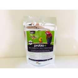 Baci + Probiotic