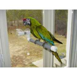 Polly's shower/window perch