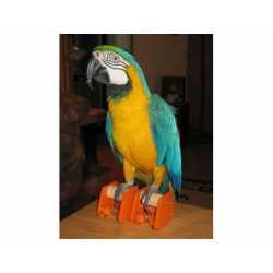 Parrot roller skates